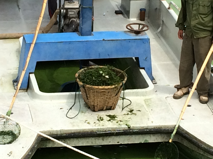 Nets don't pick up algae